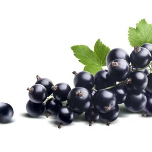 BLACK CURRANT SEEDS OIL
