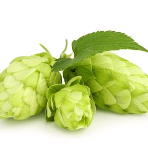 hops buds